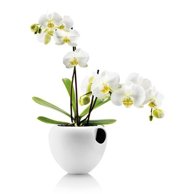 "<strong>Self-Watering Orchid Pot, $140,<a href=""http://www.until.com.au/eva-solo-orchid-pot"" target=""_blank"">&nbsp;Until</a></strong>"