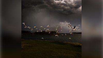 Seagulls taking flight as the storm draws near. (Instagram/melissabrowninoz)