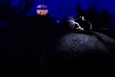 The mouse, the moon and the mosquito by Alex Badyaev