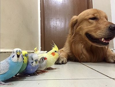 """""""I find it very cool this friendship between them. But my question is, how do you make a hamster and a bird pose?"""" said Giulia Villas Bôas Carneiro. (Instagram/bob_goldenretriever)"""
