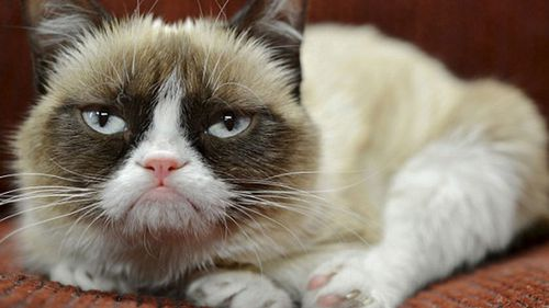 The iconic Grumpy Cat.