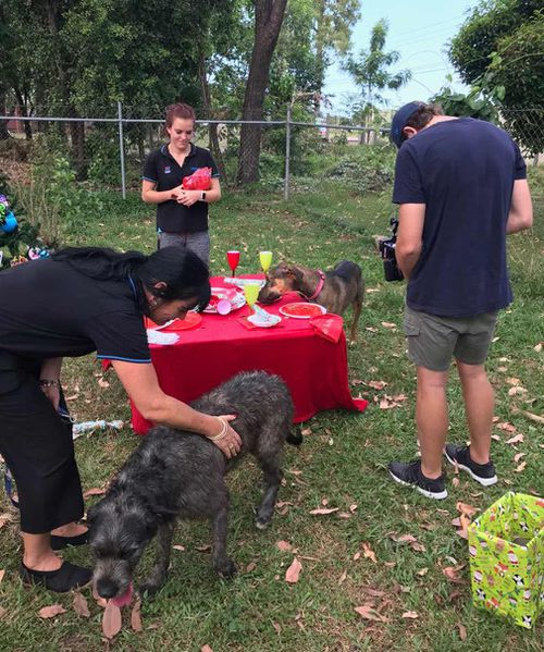 The team have pleaded with pet lovers to consider adopting a pet this Christmas. (9NEWS/Melissa Mackay)