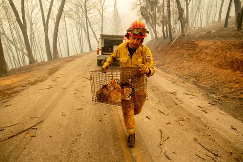 "Trump's tweet blaming ""gross mismanagement"" for the devastating fires has angered numerous people throughout California as firefighters work tirelessly to contain the blazes."