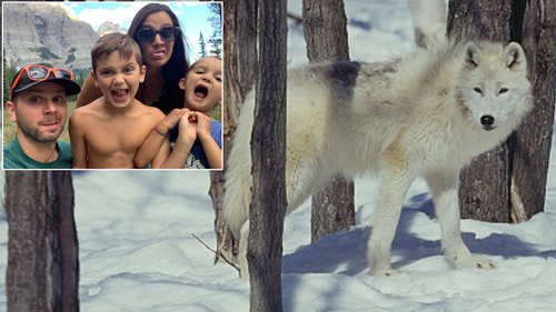 Wolf viciously attacks camping family while they sleep