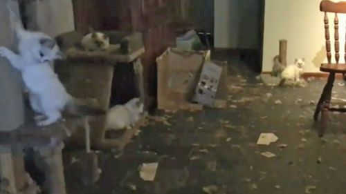 Three dead cats were found among the 118 animals in the squalid house.