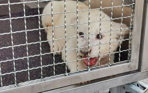 Rescuers stunned to find baby white lion after highway crash in Germany