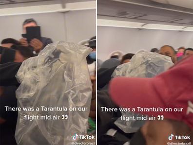 Tarantula captured on commercial flight