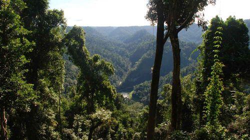 Sydney man dies in Queensland kayaking tragedy