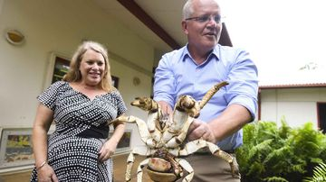 Scott Morrison yields a giant crab during his visit to Christmas Island.