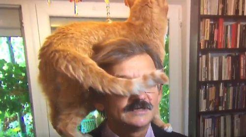 Despite the ginger feline's best efforts, Mr Targalski remained composed. Image: Twitter