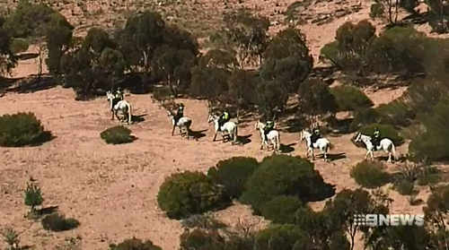 Today's search also involved police on horses - looking for evidence into four bikie-related murders.