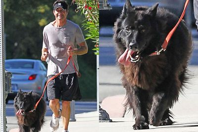 Now here's a dogaholic for you. Jerry's pictured here going for a run with his furry friend, Bim. The actor also has two other dogs, Taco and Better and when he married Rebecca Romijin, the dogs all got dressed up in bow ties for the big day. Riiight.