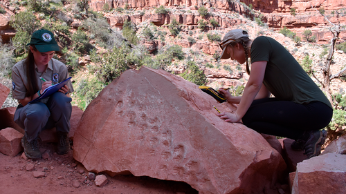 This undated photo provided by Grand Canyon National Park shows park employees Klara Widrig, left, and Anne Miller examining a rock that revealed fossilized footprints at the Grand Canyon in northern Arizona. (Grand Canyon National Park via AP)
