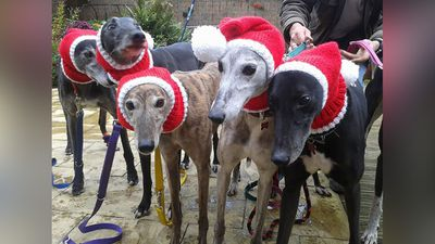 "<p>A UK woman who quit her job to knit jumpers has been flooded with orders for a new line of Christmas-themed dog couture.<br /><br />Seven year ago, 52-year-old Seaburn woman Jan Brown launched Knitted With Love, a business dedicated to knitting dog coats to help raise funds for greyhound rescue. <br /><br />In 2012 she decided to leave her job to pursue knitting full-time, and claims that since then she has been ""inundated"" with orders.<br /><br />Photos of Ms Brown's new line of Christmas coats have drawn so many buyers she has been forced to put a temporary hold on any new orders.<br /><br />A re-post of Ms Brown's photos to Facebook has received more than 13,710 likes and 4,490 shares.</p><p><strong>Click through for more examples of canine knitwear at its finest.</strong></p>"