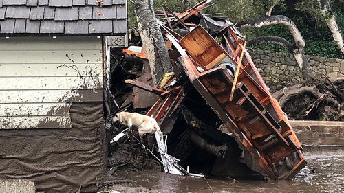 A fire search dog looks for victims in damaged and destroyed homes following deadly runoff of mud and debris from heavy rain overnight during heavy rains in Montecito, California. (AAP)