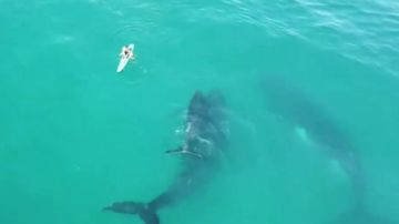 Tourist gets up close and personal with pod of gentle giants