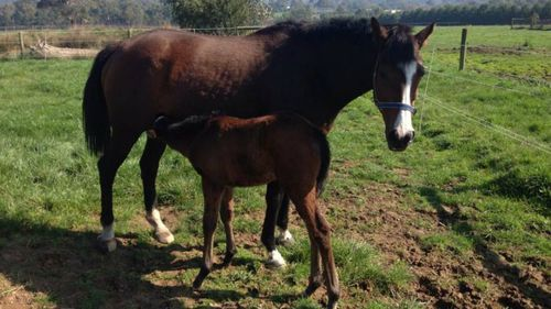 Retired Victorian racehorse shot dead on family property