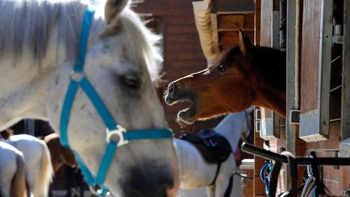 France's horses killed in mysterious ritual-like mutilations