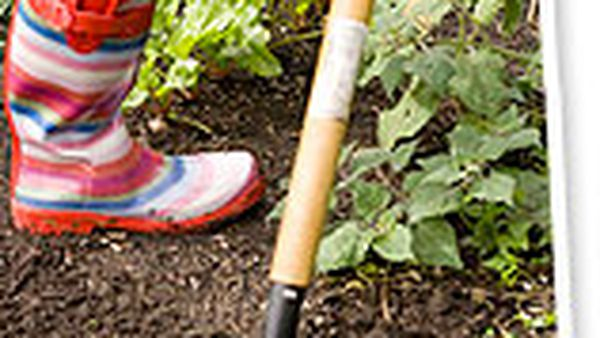 Grow your own potted kitchen garden