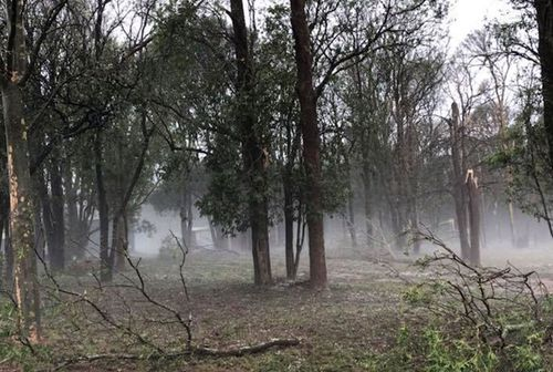 Trees were felled and others had branches torn off during the storm on Damien Tessmann's property.