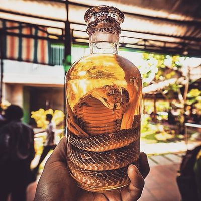 <p>Snake Wine or Habushu is exactly what it looks like, a bottle of wine with an entire dead cobra inside it.</p> <p>Image Source: Instagram: travelnquote</p>