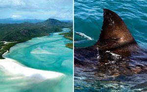Queensland tourist industry calls for extra shark control measures