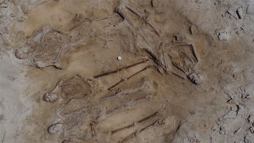 The mass grave was discovered on the Abrolhos Islands.