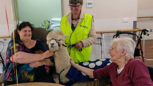 Harold on one of his many visits to an assisted-care facility. (Facebook)