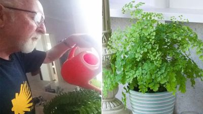 Wife pranks husband years after her death with plastic pot plant
