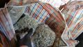 Police uncovered 93kg of cannabis at a border stop.