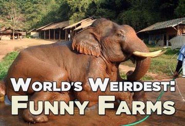 World's Weirdest: Funny Farms