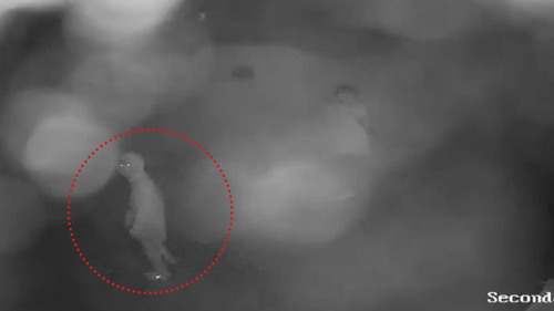 The outline of the offenders can be seen in security footage.