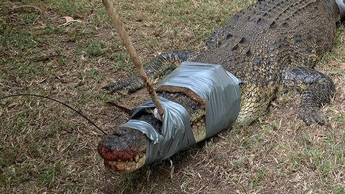 Croc caught on family's property in Bees Creek