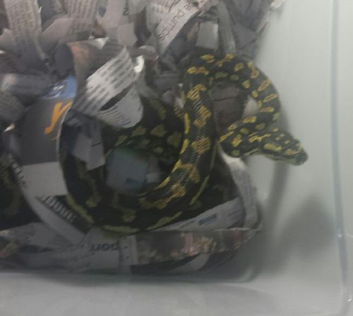 Man takes snake onto NSW train in his backpack