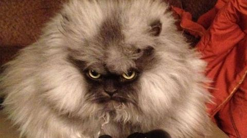 Grumpy-faced cat takes internet by storm, demands a spot on <i>Ellen</i>