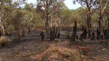 Police hunt firebug after blaze threatens Perth homes