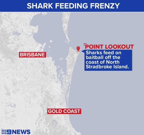 A 9NEWS chopper captured the sharks off Point Lookout. (9NEWS)