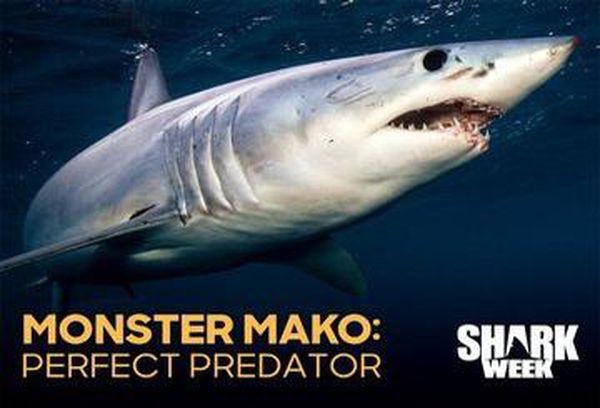 Monster Mako: Perfect Predator