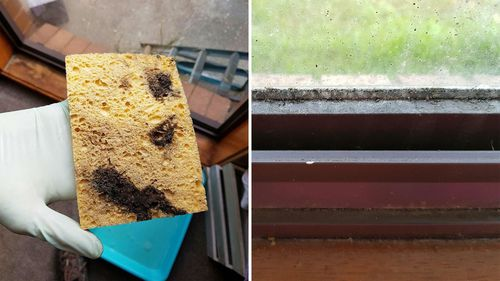 Ms Harrison said had fallen ill several times after trying to clean up the mould. (Photo: Melissa Harrison)