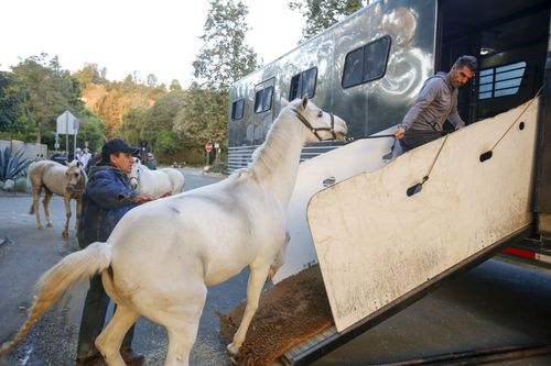"""Horses are evacuated near the Getty Fire area in Brentwood, Calif., Monday, Oct. 28, 2019. Fire conditions statewide have made California a """"tinderbox,"""" said Jonathan Cox, a spokesman for the California Department of Forestry and Fire Protection. (AP Photo/Ringo H.W. Chiu)"""