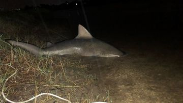 Teen comes face-to-face with 'monster' bull shark