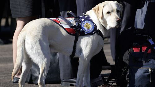 Sully, the former President's service dog, was also in attendance at the send-off.