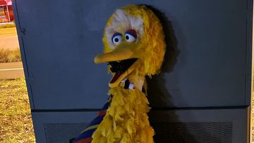 The Big Bird costume was returned to the circus this morning.