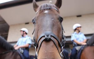 Man charged after alleged assault on police and horse