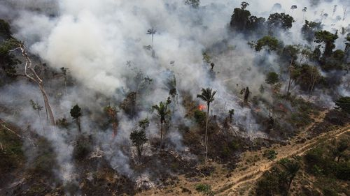 Forest in the Amazon burned illegally near Novo Progresso, in the northern Brazilian state of Para.