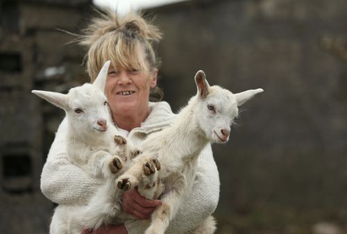 Angela Bermingham with her twin geep, This and That. (AAP)