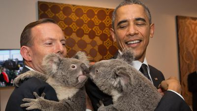 Mr Abbott and US President Barack Obama share a moment with Jimbelung the koala. (Getty Images)
