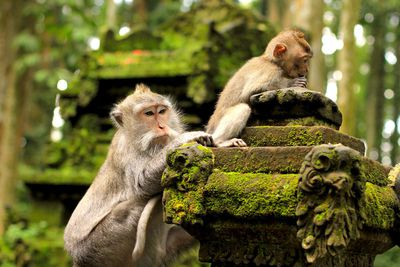 <strong>The Sacred Monkey Forest of Padangtegal, Indonesia</strong>