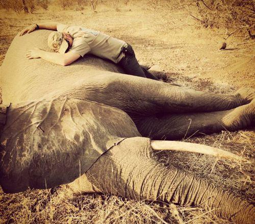 Prince Harry hugged a sedated elephant in southern Africa. (Instagram / @kensingtonroyal)