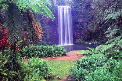 Millaa Millaa Falls, Queensland